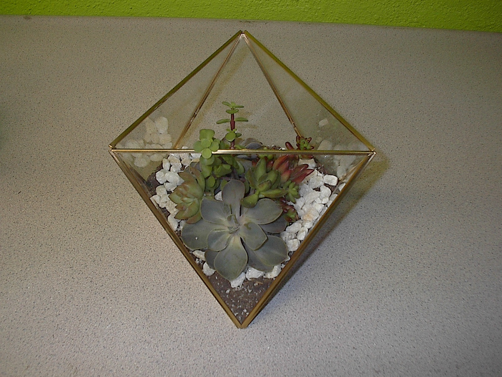 Succulent plants for tradeshow in Las Vegas