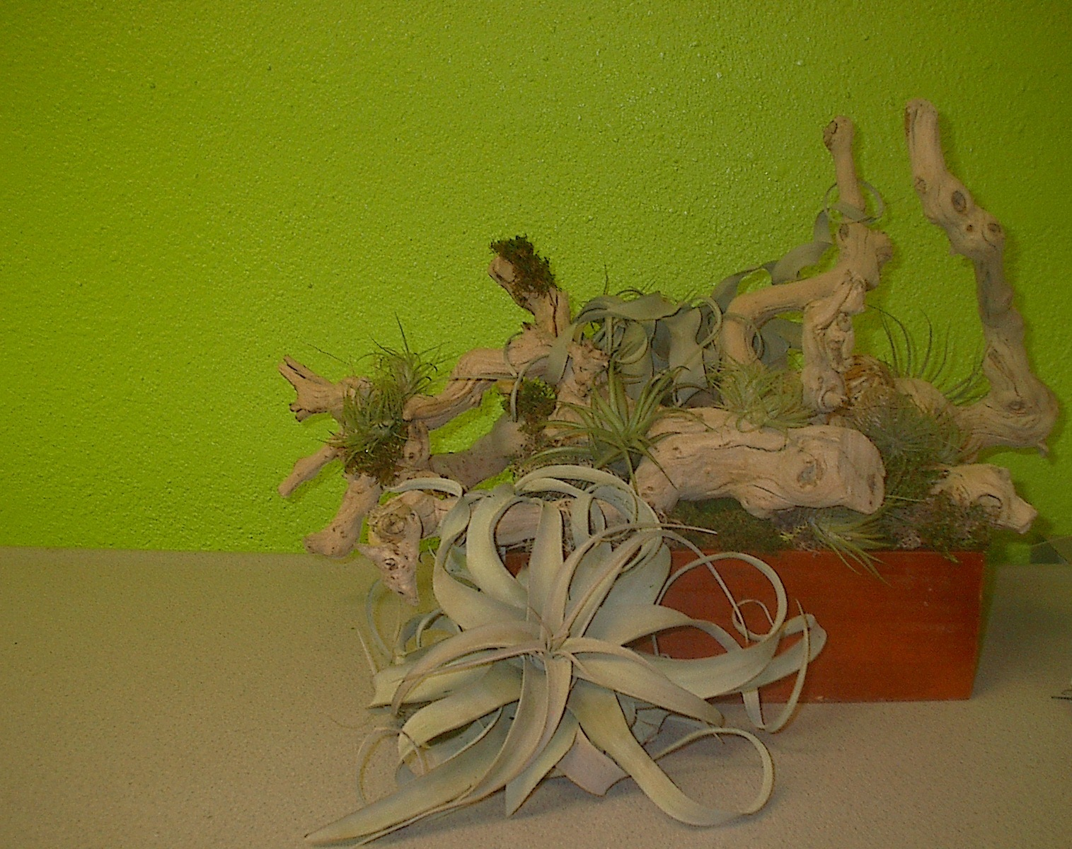 Air plants for convention display in Las Vegas
